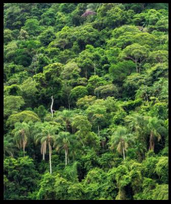 kaart_netherland